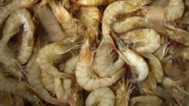 Gulf Seafood Officially Safe, but Questions and Oil Linger