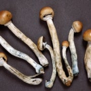 Magic Mushroom Drug Lifts Depression in Human Trial