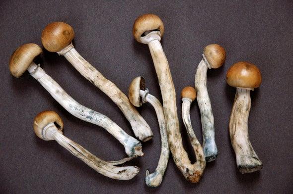 Magic Mushroom Drug Lifts Depression in Human Trial