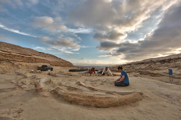 Fossils Reveal Evidence of Mass Whale Die-offs