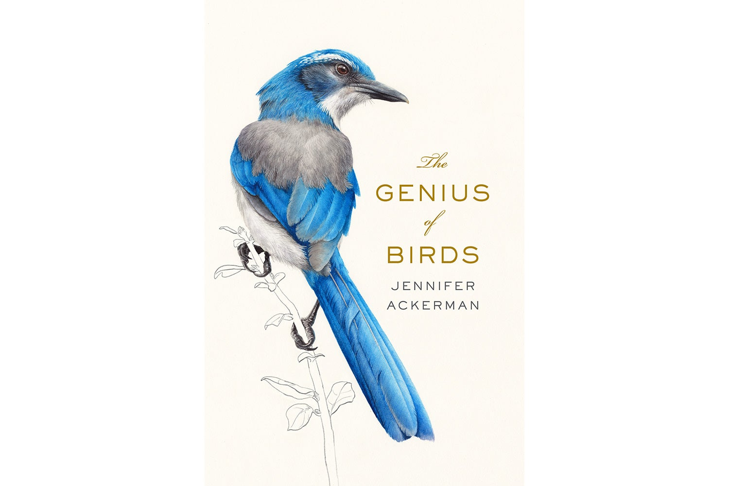 the brilliance of the birds scientific american