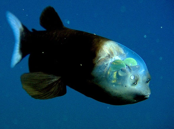 The Clear-Headed Fish