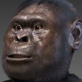 essay on evolution of human