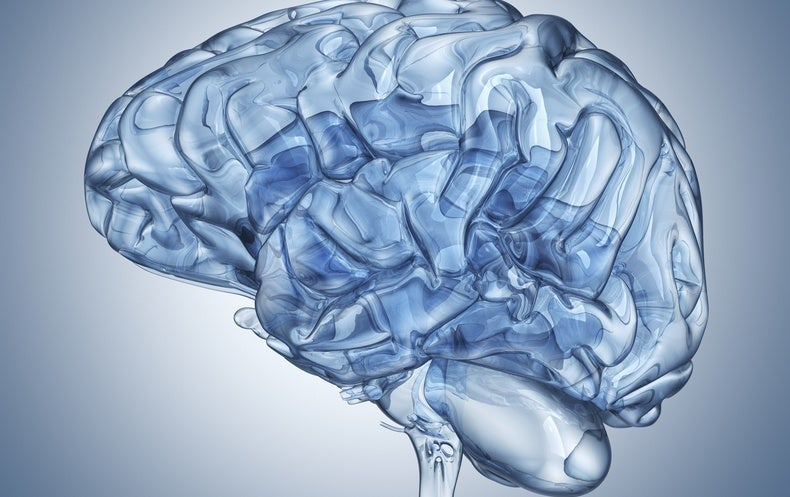 Possible Anti-Aging Brain Therapy Shows Promise in Mice