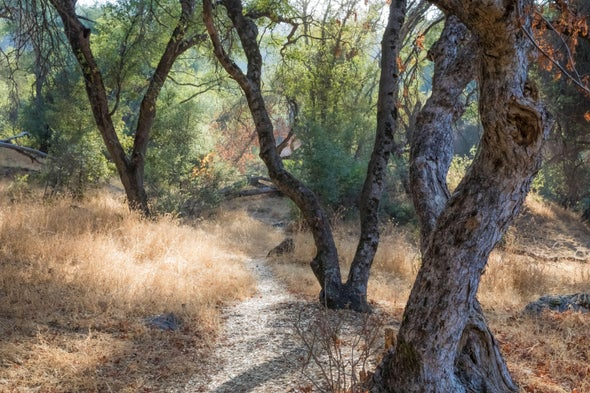 National Park Nature Walks, Episode 8: The Blue Oaks of Sequoia