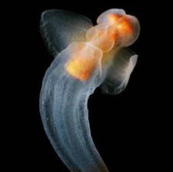 Same Species, Polar Opposites: The Mystery of Identical Creatures Found in both Arctic and Antarctic Waters [Slide Show]