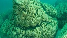 A Lake That Looks Like Mars