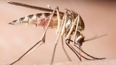 New Insecticide Makes Mosquitoes Pop