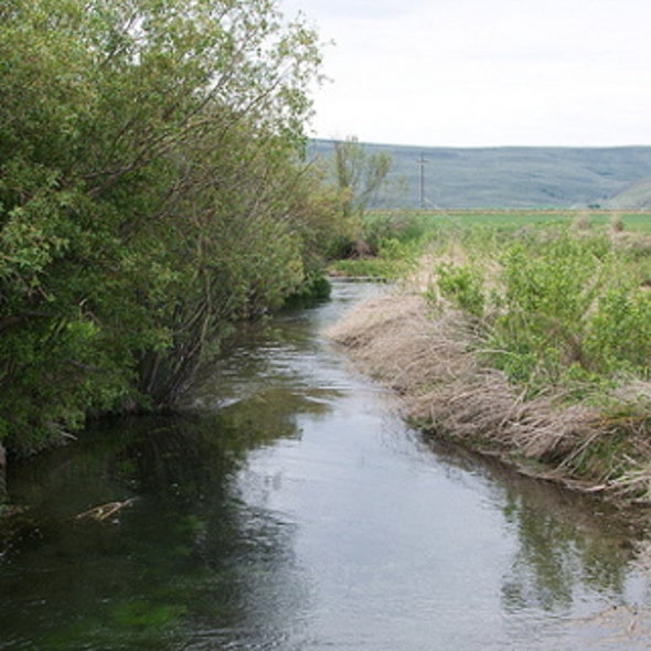 Real Good or Feel-Good? Does Ecosystem Restoration Pay Off?