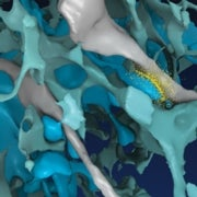 Signals in a Storm: Seeing Brain Cells Communicate