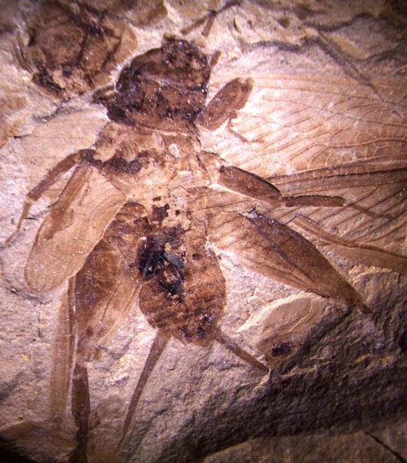 Auditory Organs in Insect Fossils Hint at Evolutionary Relationship between Predator and Prey