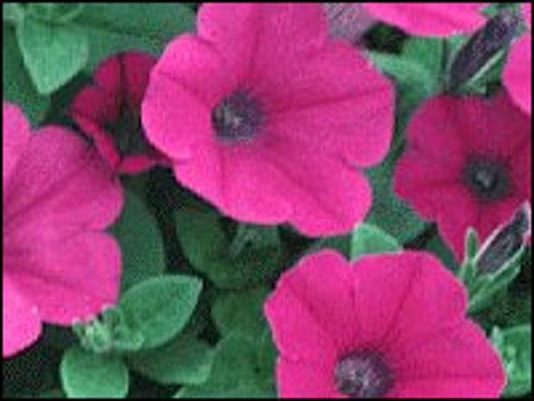 Studies Elucidate How Flowering Plants Sidestep Self-Fertilization