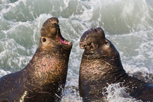 Bioluminescence Helps Prey Avoid Hungry Seals