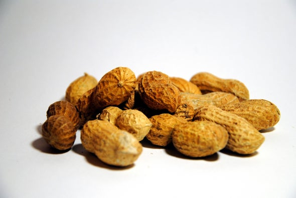 Infants Should Be Fed Peanuts to Stave Off Allergies