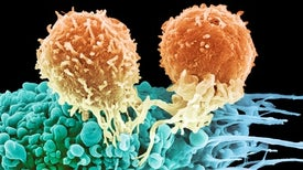Fighting the Resistance in Cancer