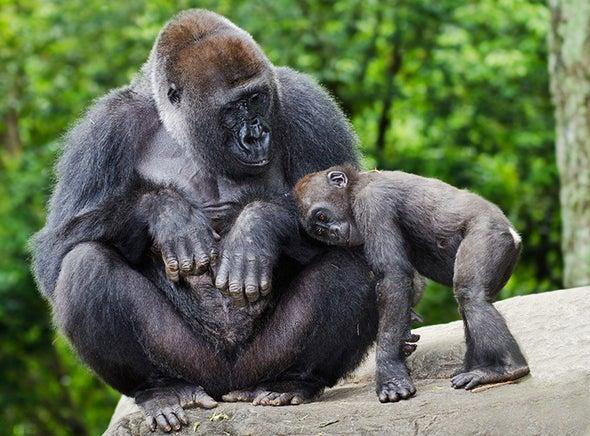 Fossils Shed New Light on Human–Gorilla Split