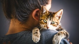 Famously Fickle Felines Are, in Fact, Clingy
