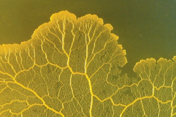 How Slime Molds Remember Where They Ate