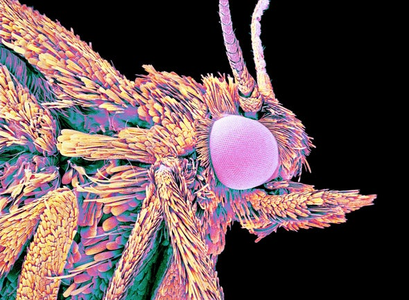 Learning from Nature: Moth Eyes Inspire Nonreflective Screen Coating