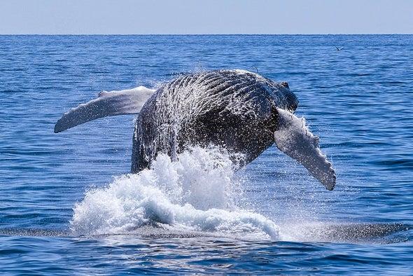 Genetic Flotsam Offers Clues to Ocean Biodiversity