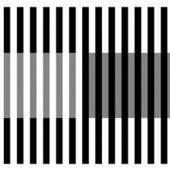 White's effect