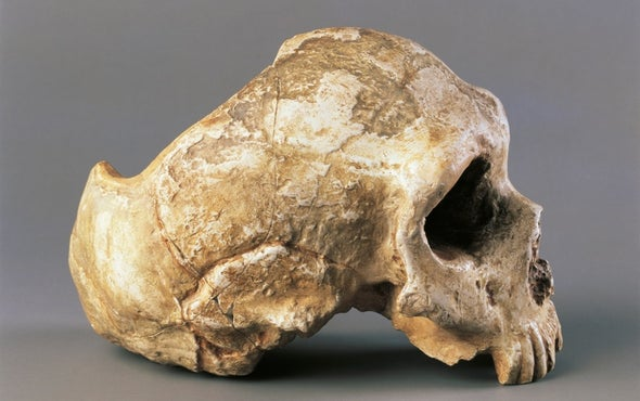 Human Brain Gain: Computer Models Hint at Why We Bested Neandertals