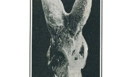 100 Years Ago: Egyptian Fossil Discovery