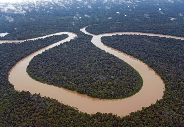 Amazon Rain Forest May Have Once Been a Giant Marine Lake