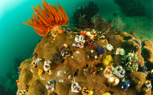 Cores from Coral Reefs Hold Secrets of the Ocean's Past and Future