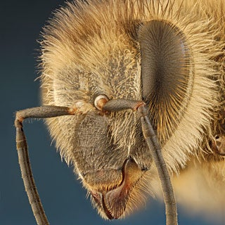 Solving the Mystery of the Vanishing Bees