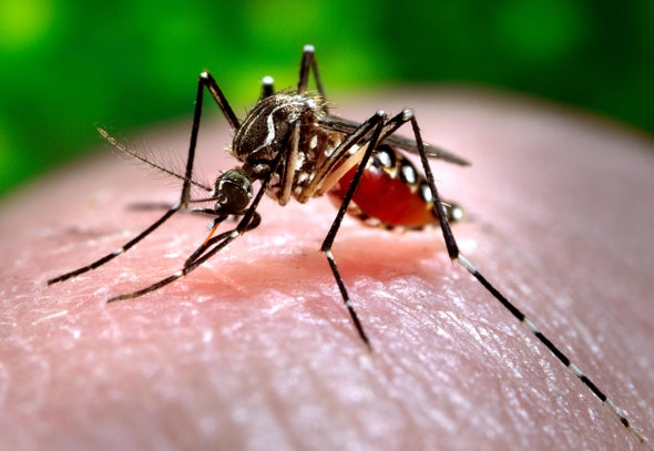 Mosquito- and Tick-Borne Diseases Are Rising in the U.S.