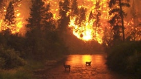 New Report Warns Mega-Fire Risk Is Global and Growing