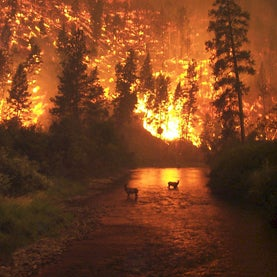climate change, global warming, fire, forest fire, mega-fire