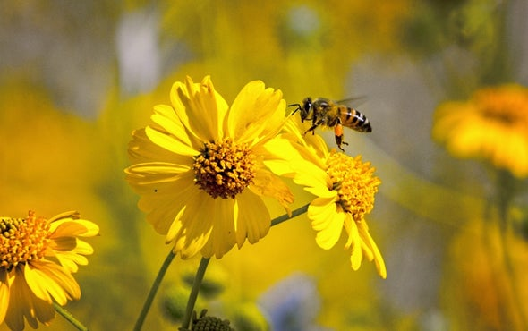Summer Safety: How to Avoid Bee-Swarm Attacks