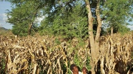 Rebuilding Africa's Soil, 1 Farm at a Time