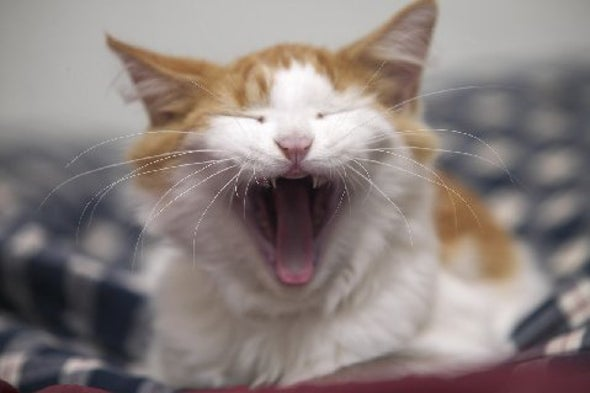 Old Cats Can Get Seizures from Sound