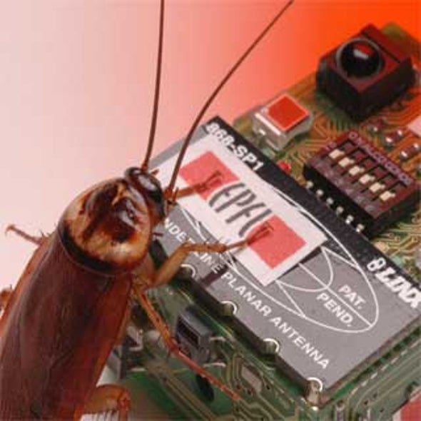 Robotic Roaches Mess with Real Bugs' Minds