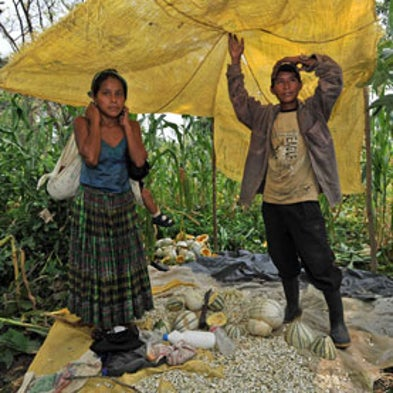 Biofuels Land Grab: Guatemala's Farmers Lose Plots and Prosperity to