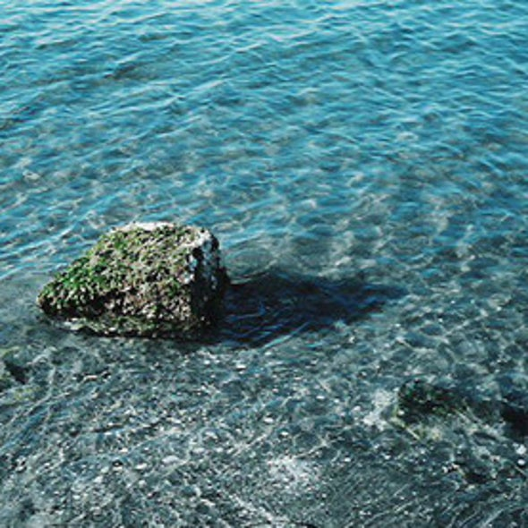 Pollution and Climate Change Accelerate Ocean Degradation