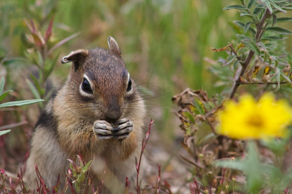 During a Rodent Quadrathlon, Researchers Learn That Ground Squirrels Have Personalities