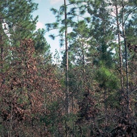 U.S. Forests Soak Up Carbon Dioxide, but for How Long?