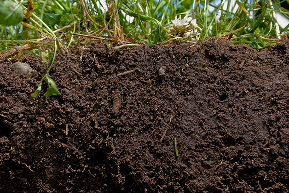 3 Big Myths about Modern Agriculture - Scientific American