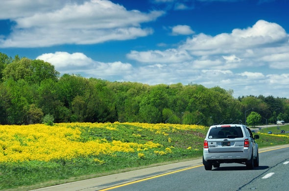 Why Can't We Plant Trees in Highway Medians?
