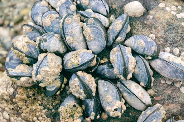 Plastic Found in Mussels from the Arctic to China