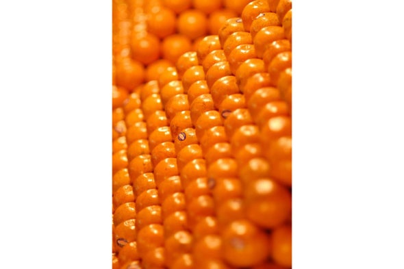 """Multidimensional """"Sphere Packing"""" Solutions Stack Up as a Major Mathematical Breakthrough"""