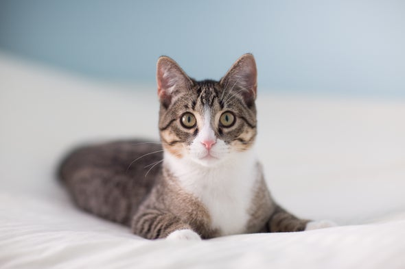 Cats Can Get Coronavirus, Study Suggests--but Pet Owners Need Not Panic