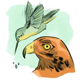 For the Birds: Best-Adapted Beaks - Scientific American