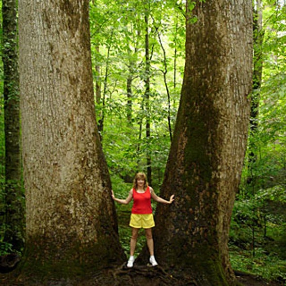 Are Old-Growth Forests Protected in the U.S.?