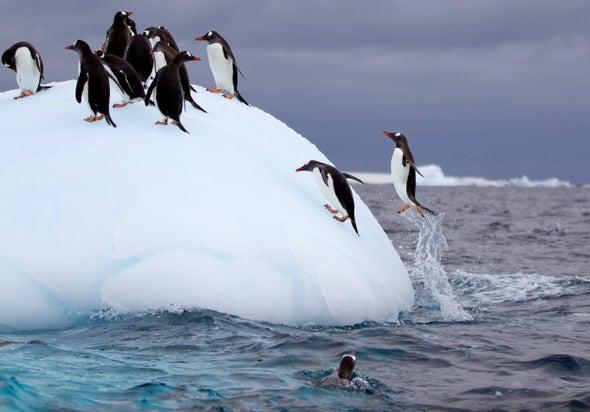 Penguin Poop Helps Biodiversity Bloom in Antarctica