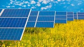 Caffeine Peps Up Solar Energy
